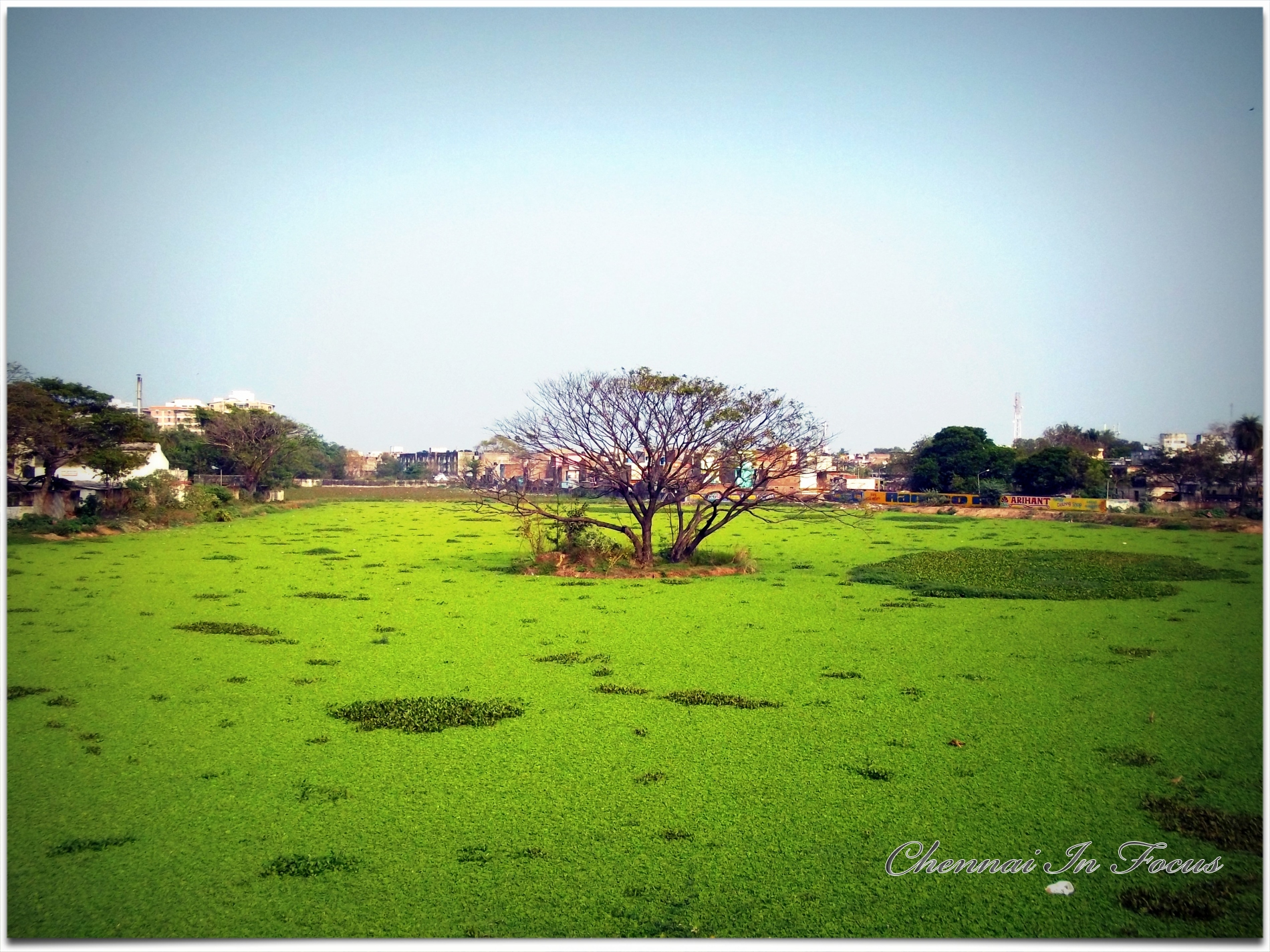 Chetpet Lake - Chennai In Focus