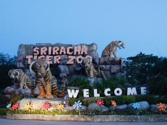Sriracha Tiger Zoo - Pattaya