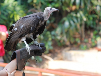 Jurong Bird Park -  Wildlife Reserves Singapore